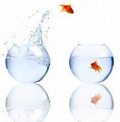 peces_saltando